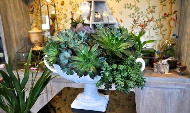5. succulents